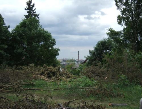 NIE dla wycinki drzew obok Wieży Braniborskiej